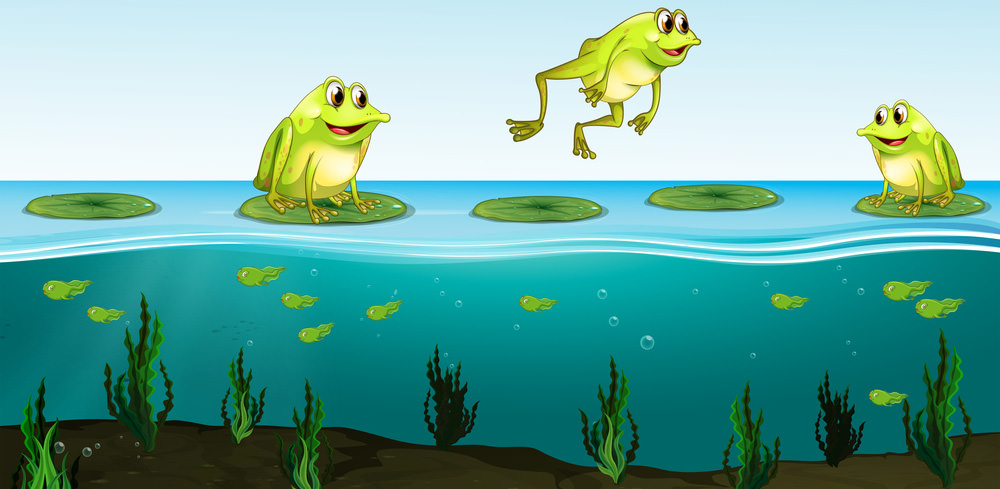 FrogsOnWater
